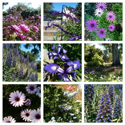 I am thankful for the beauty and growth of spring; for the incredible shades of purple, for the delight, wonder, and awe of this sweet, sweet Earth. Photos taken 3/22/2013 on my work grounds.